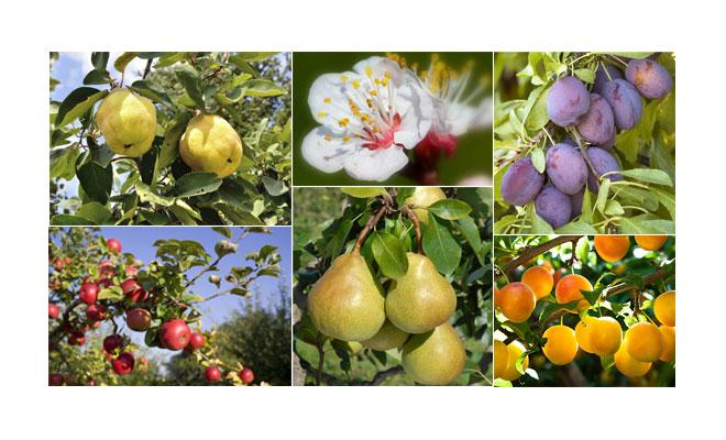 Les fruits produits sur le verger